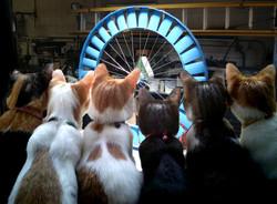 Blue Cats WindJET 1