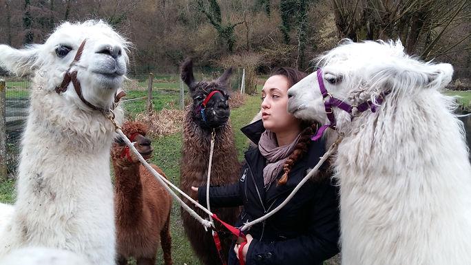 contavt avec nos lamas