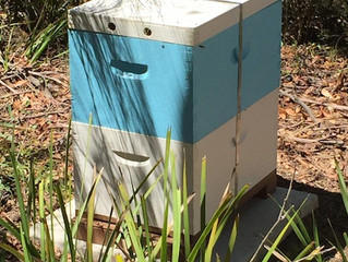 New little buzzing boxes on a hillside.
