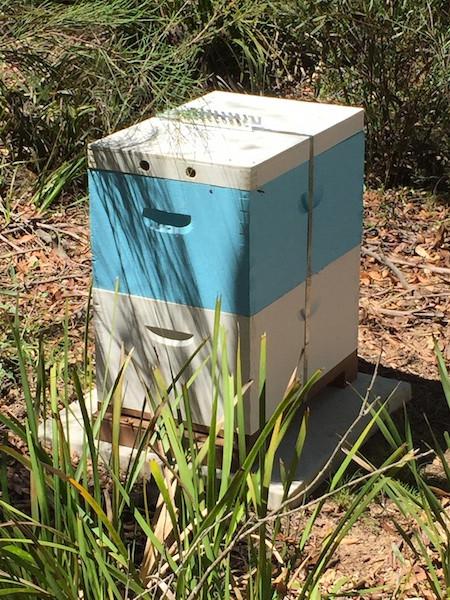 Hive in landscape websized.jpg