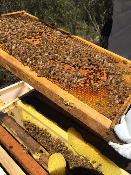 Hive starter.jpg