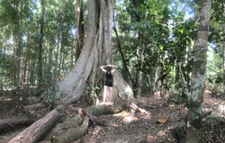 hiking beautiful tree