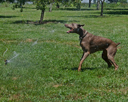 JULY-Ruby and the sprinkler_LHD0157 copy