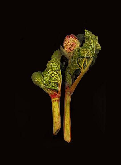 Rhubarb copy (2).jpg