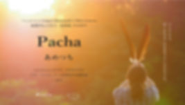 pacha-flyer-B.jpg