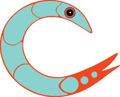 shimmershrimp