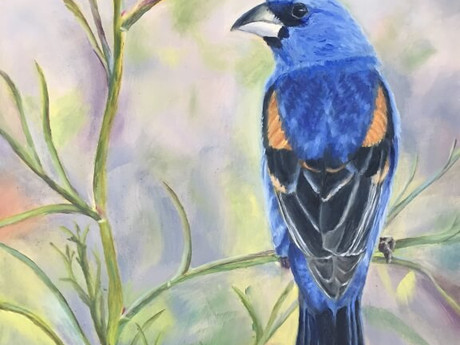 Colorful Birds: Blue Grosbeak