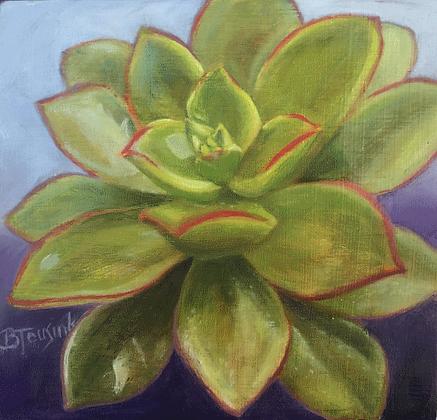 """""""Sweet Succulent (Aeonium """"Kiwi"""")"""""""