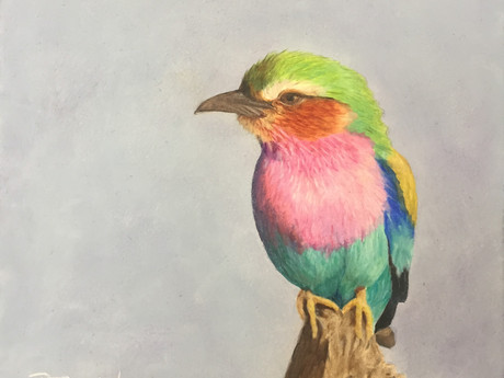 Colorful Birds: Lilac Breasted Roller