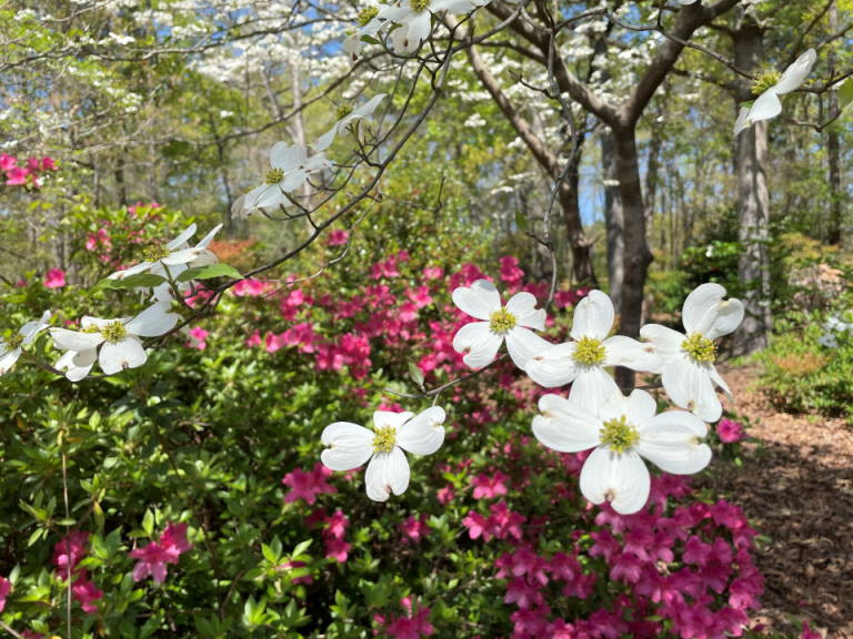 Photo of spring flowers by Barbara Teusink
