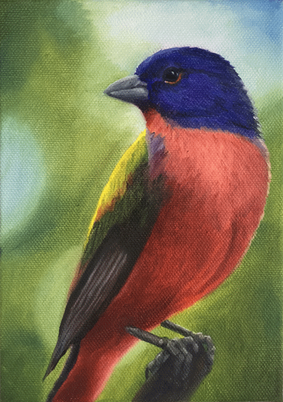 """Oil painting """"Painted Bunting"""" by Barbara Teusink"""
