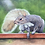 "Thumbnail: ""Squirrel! (Phoebe's Addiction)"""