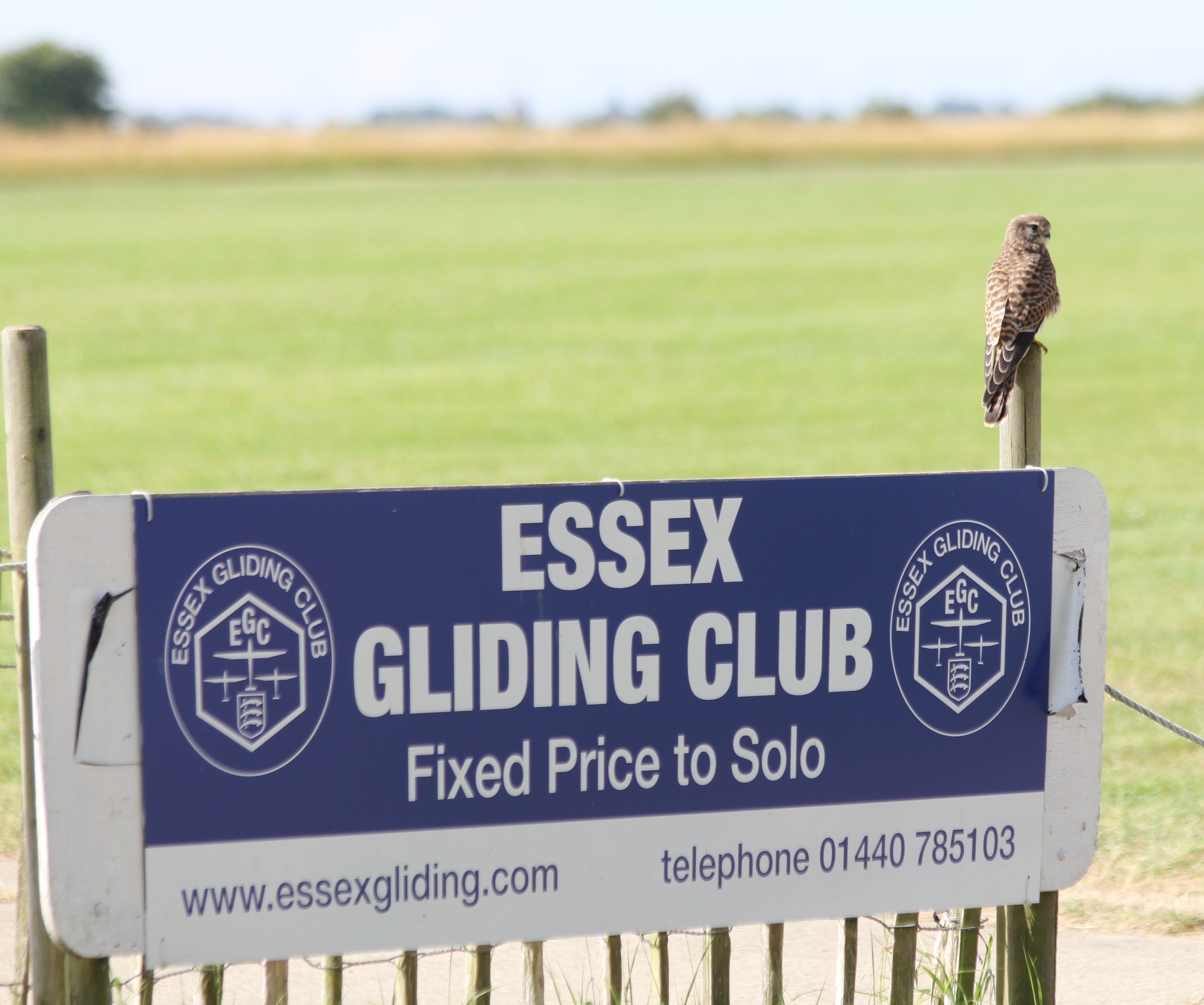 Essex Gliding Club Kestrel
