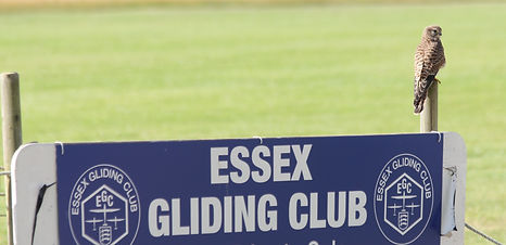 Kestrel Perched On Gliding Club Sign