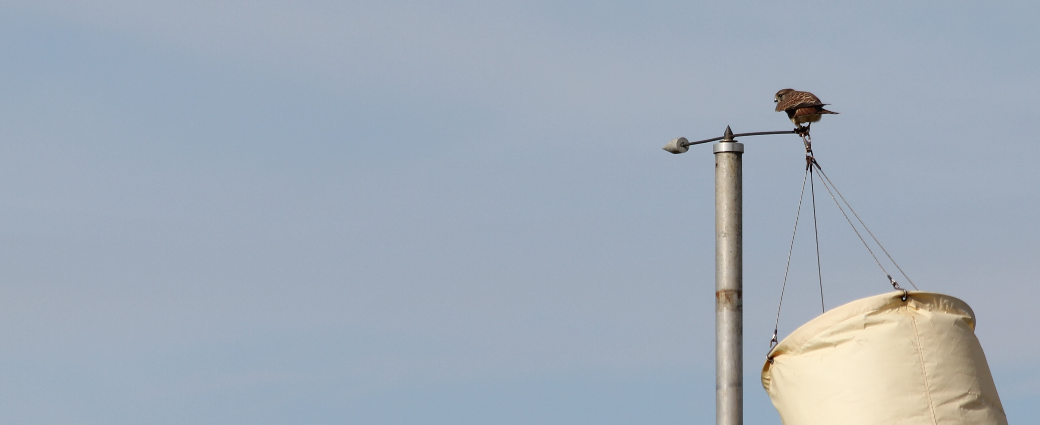 Kestrel on windsock - Banner