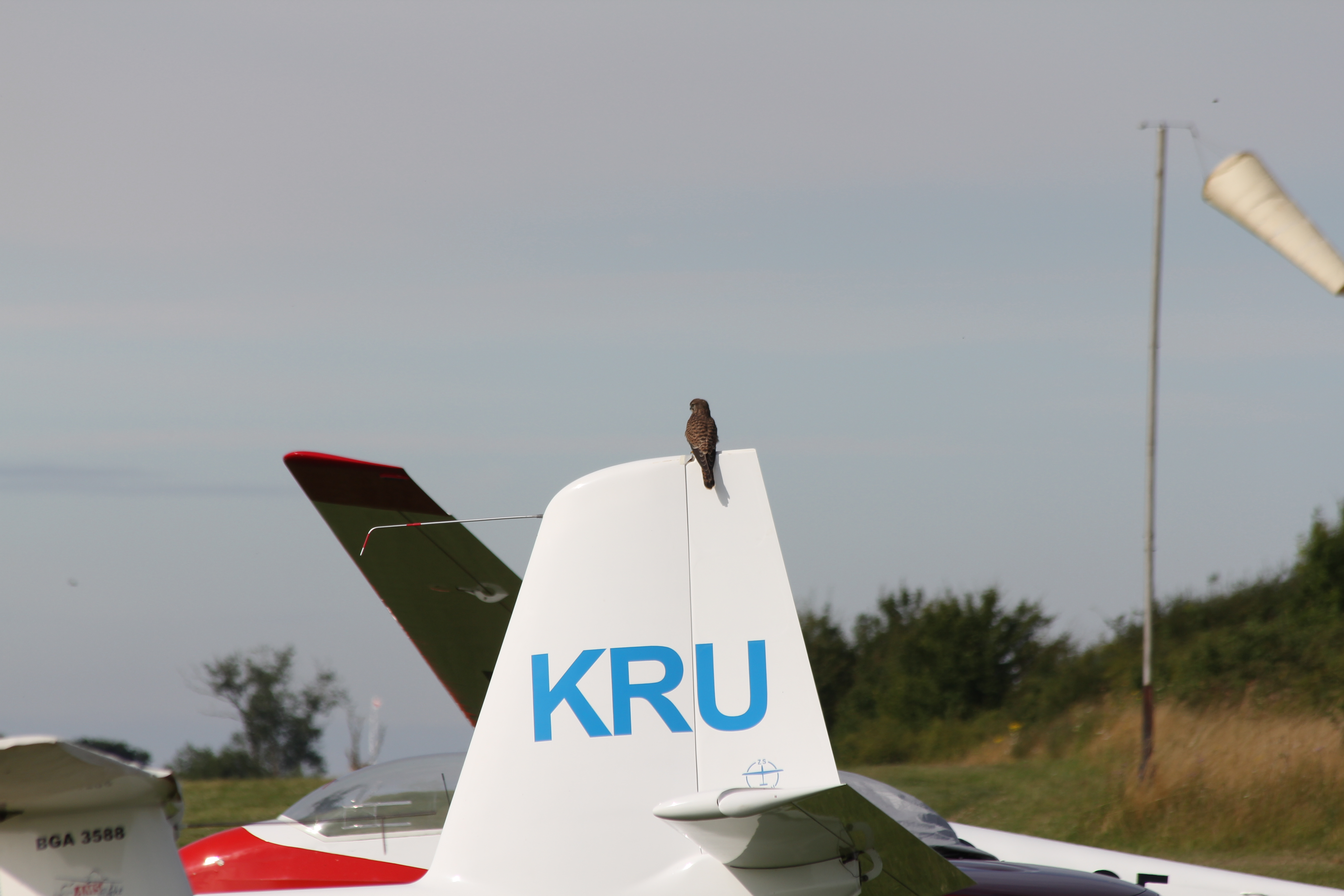 Kestrel perched on top of glider fin