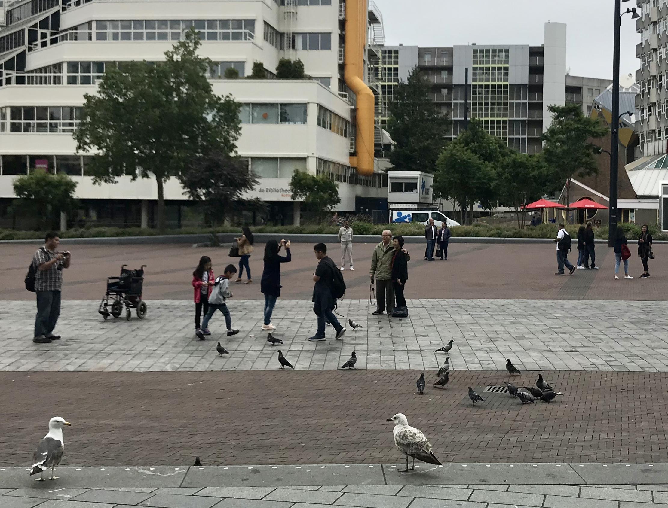 Rotterdam walkable public space