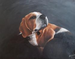 Beagles - SOLD