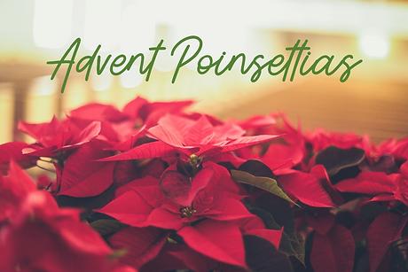 Poinsettias.png
