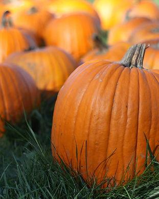 DOTF_Pumpkins2.jpg