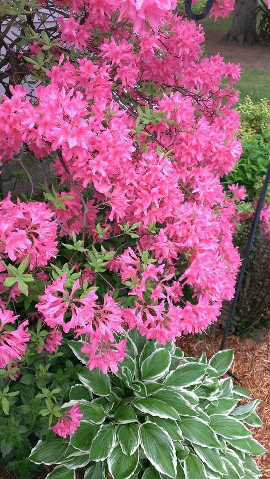 DOTF_flowers.jpg
