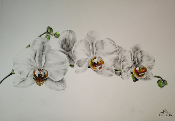 Orchids 329