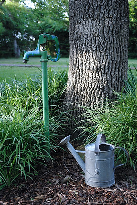 Tree and bucket