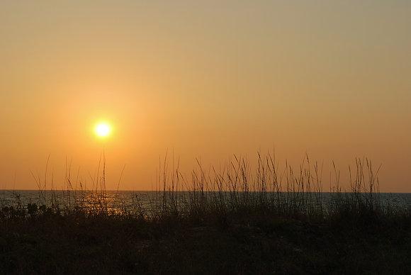 Florida Sunset Through Grass