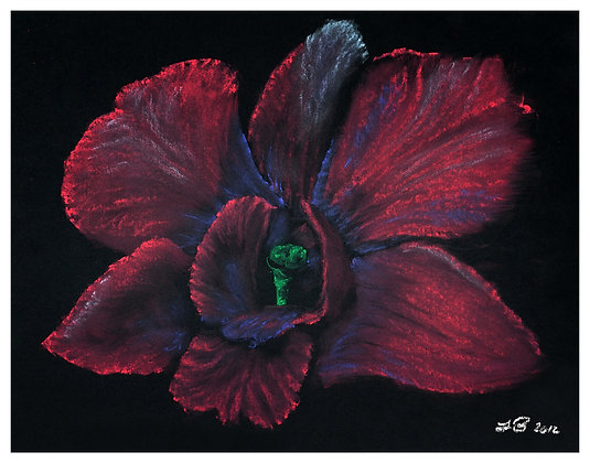 Orchid 2012