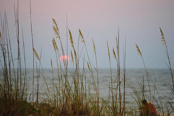 Florida Sunset and Grass