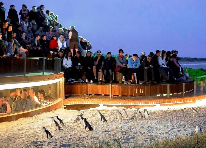 Penguins-Plus-LR.jpg
