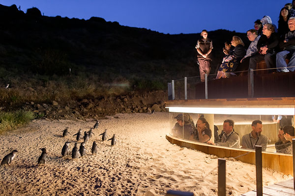 Upgraded seating at the Penguin Parade