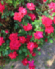 JPEG image-540A5C2A8DDF-1.jpeg
