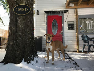 The Brew Cellar dog in front of Charleston business location in winter time