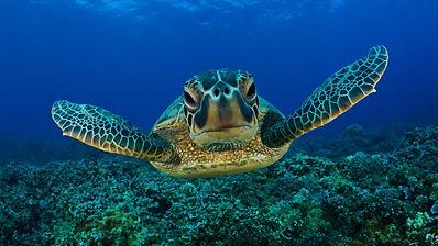 Tartaruga-marina-01.jpg