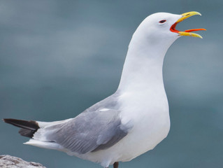 What businesses can do NOW to ease seagull menace!