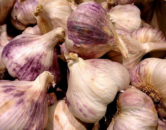 Ail violet, la tête
