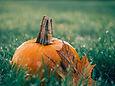 pumpkin-g3d46c423a_1280.jpg