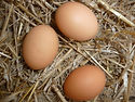 eggs-1348537_1920.jpg