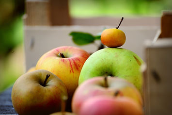 apples-5565966_1920.jpg