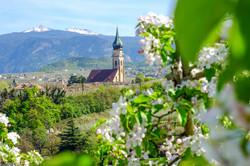 Frühling3_c_MarionLafogler-TourismusvereinEppan