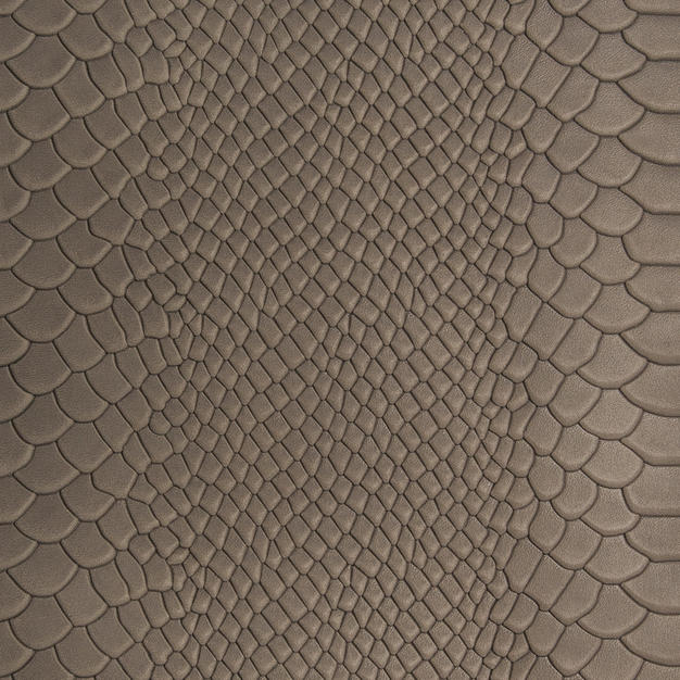 brown scales 048