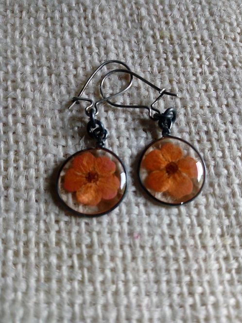 orecchini tondi, filo brunito, monachella arg.925