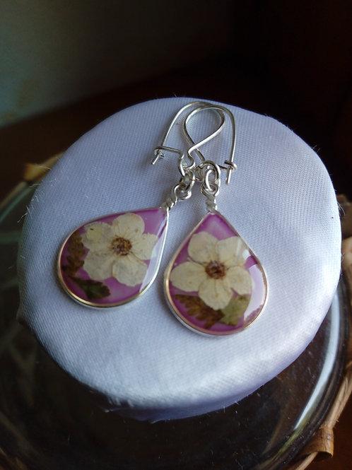 orecchini fondo rosato