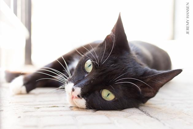 The Cat's Eye