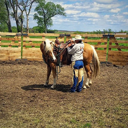 Re-Educating/Problem Horses, Lexy Nuesch Horse Training, Nebraska, horse, NE, Johnstown