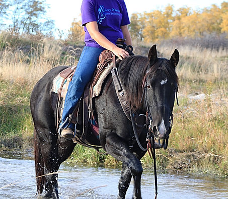 Lexy Nuesch Horse Training, Gypsy, Nebraska, Creek, black, horse, mare, Heico Gypsy