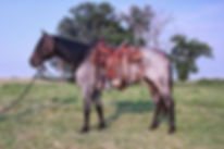 Dally, Sales Prep/Marketng, Lexy Nuesch Horse Training, Nebraska, Horse for Sale, Sell, sold, marketing, sales preparation, Nebraska, NE, Johnstown