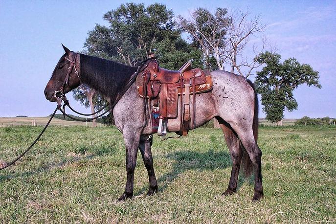 Dally, Sales Prep/Marketng, Lexy Nuesch Horse Training, Nebraska, Horse for Sale, Sell, sold, marketing, sales preparation, Nebraska, NE, Johnstown