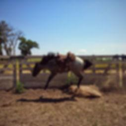 Colt Starting, first saddle, Lexy Nuesch Horse Training, Nebraska, horse